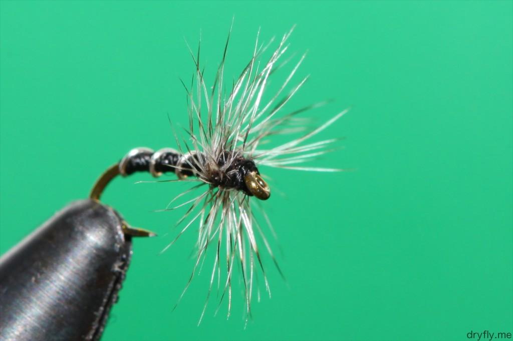 2013.05.dryfly.me.midge_adult_22_front