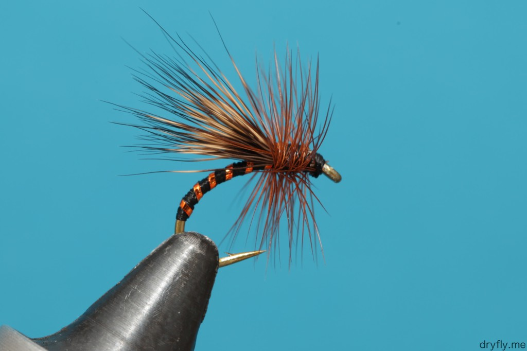 dryfly.me.2013.11.05.caddis_black_gold