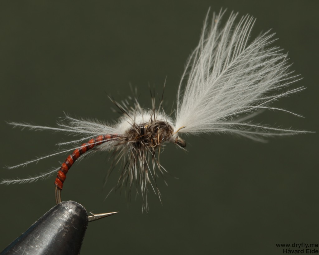 dryfly.me.2014.03.23.midge_emerger_hackle