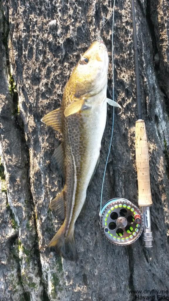 dryfly.me.2014.03.30.fishing_cod1